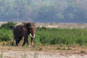 asian-elephant-corbett-AB 7821