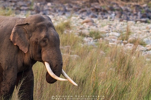 asian-elephant-corbett-AB 7585