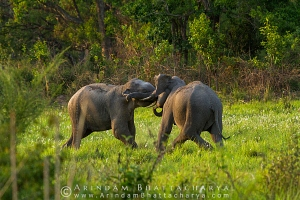 asian-elephant-corbett-AB 6760