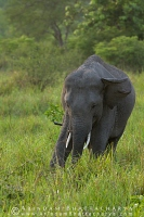 asian-elephant-corbett-AB 6675