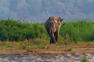 asian-elephant-corbett-AB 7303