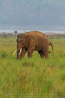 asian-elephant-corbett-AB 6824