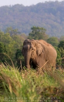 asian-elephant-corbett-AB 7326